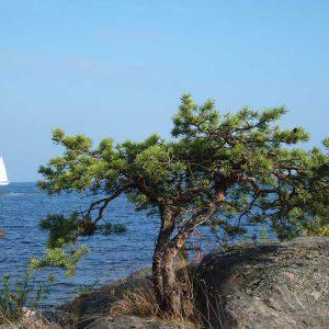 An der Ostsee bei Kalmar
